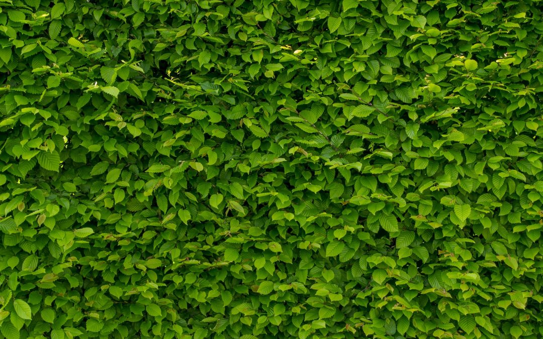 It's Easy Being Green: 4 Tips for Energy Efficient Landscaping