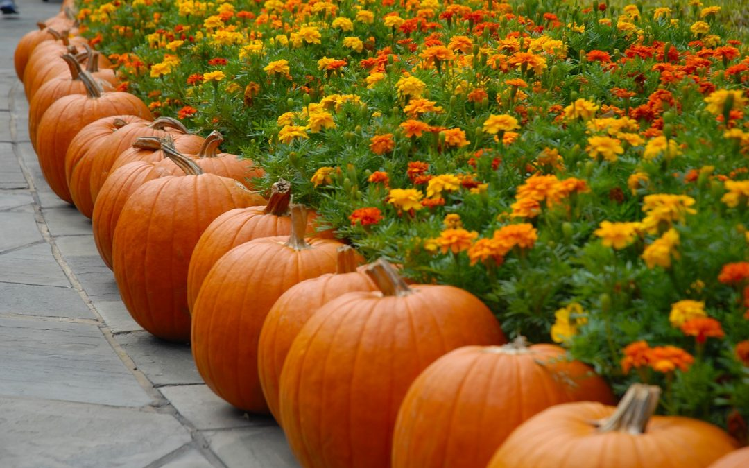 Host the Best Fall Bash in Your Outdoor Living Space with These Tips