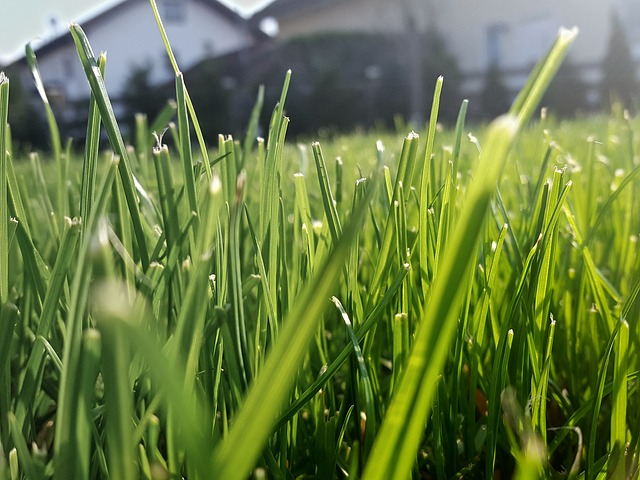 When Do I Need to Start Mowing Again?